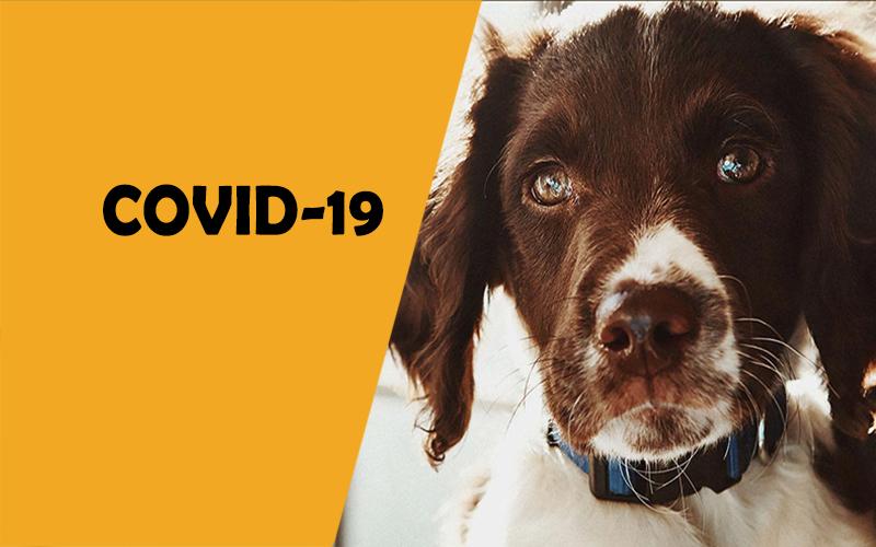 COVID-19 Ενημέρωση