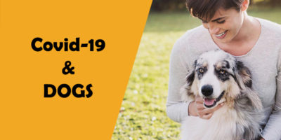 Covid-19 (Coronavirus) and DOGS