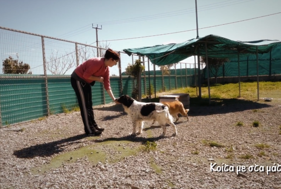 2nd Chance Dogs Center/ training and socialization - Κοίτα με στα μάτια
