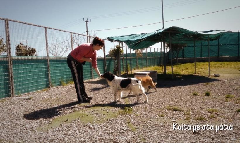 2nd Chance Dogs Center/ training and socialization - Κοίτα με στα μάτια