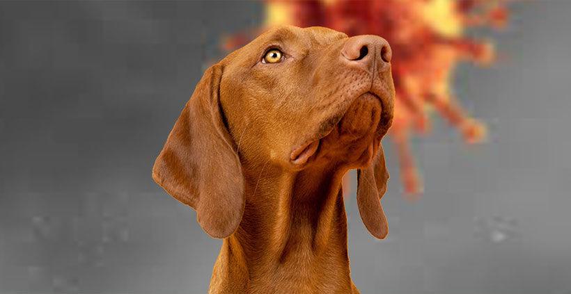 Covid-19 – Can dogs catch Covid-19?