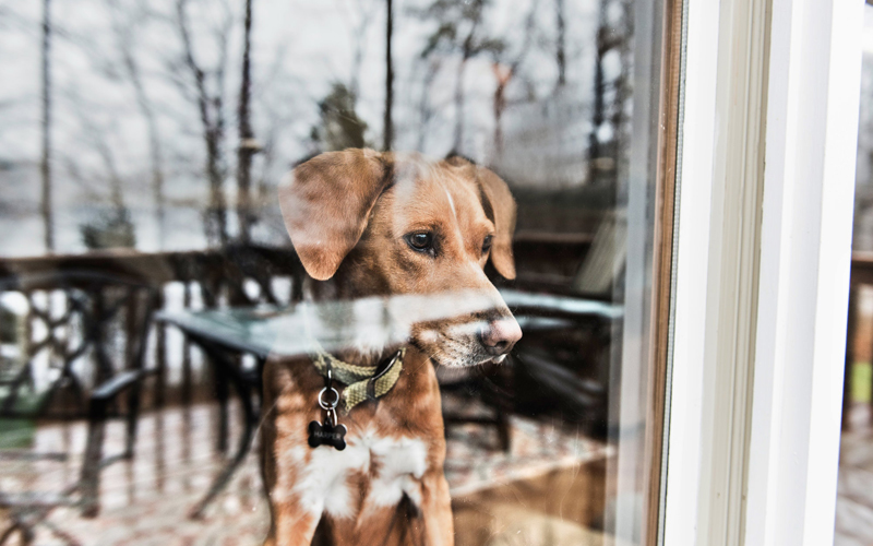 Covid-19 Advice for self-isolating pet owners