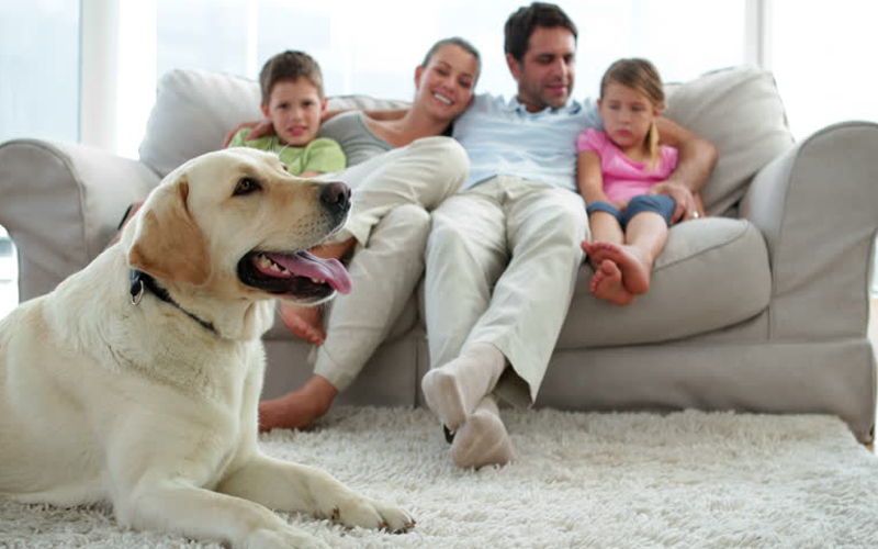Covid-19 -What precautions should I take with my own dogs?