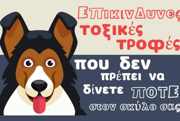 Τοξικά και επικίνδυνα τρόφιμα που δεν πρέπει να φάει ποτέ ο σκύλος σας